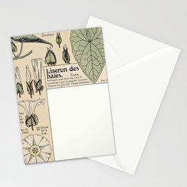 Maurice Pillard Verneuil - Étude de la plante (1903): Hedge Bindweed Stationery Cards