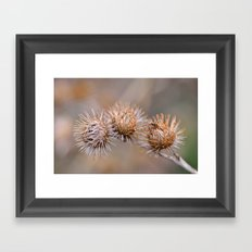Thorn Pods Framed Art Print