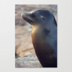 sea lion profile Canvas Print