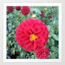 Autumn flower, red beauty. Art Print
