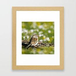 Field Sparrow Framed Art Print