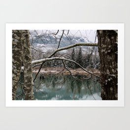 Cold trees Art Print