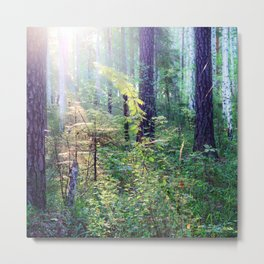 Sunny morning in the forest Metal Print