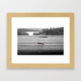 Red Ant Framed Art Print