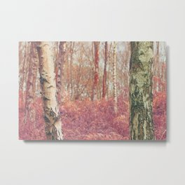 Silver Birch Woodland Metal Print