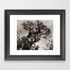 Wise Old Tree 2 Framed Art Print