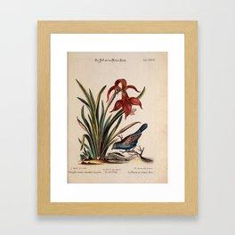 Verzameling van uitlandsche en zeldzaame vogelen Framed Art Print