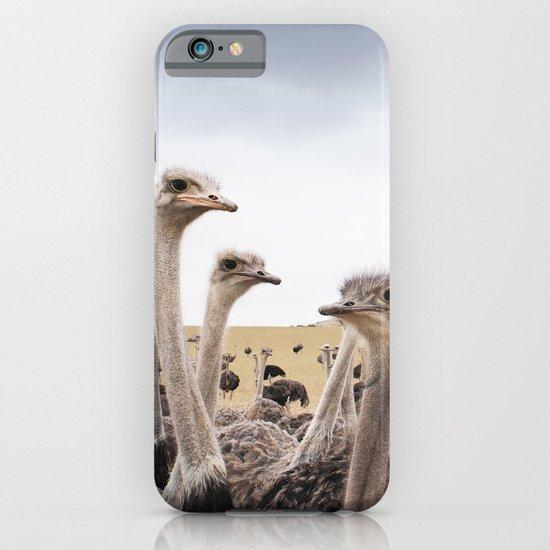 Ostriches iPhone & iPod Case