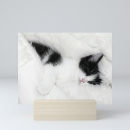 Sleeping cat Mini Art Print
