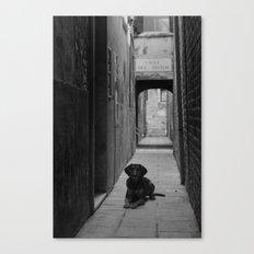 Alley Hound Canvas Print