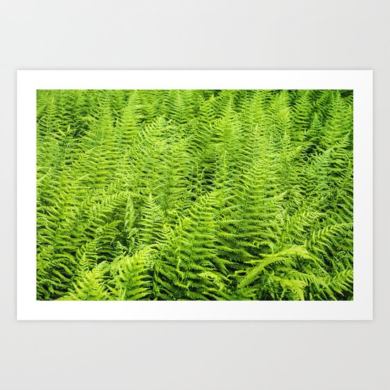 sea of ferns Art Print