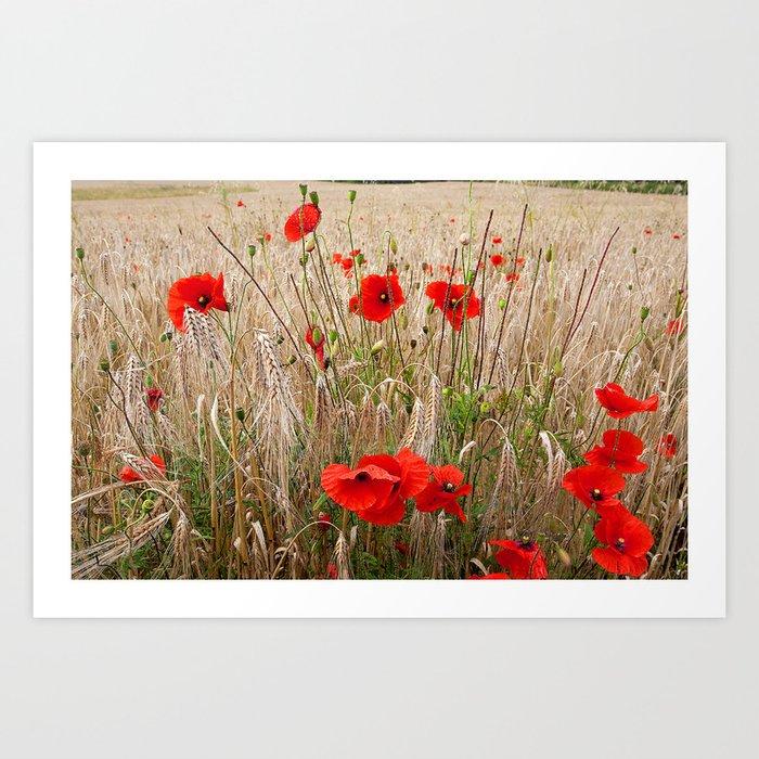 Poppies in cornfield Art Print