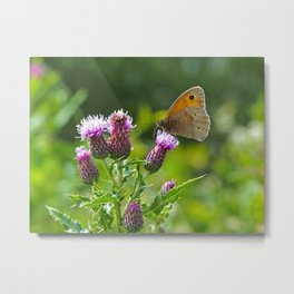 Meadow Brown Butterfly on a Purple Thistle Metal Print