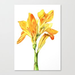 Golden Canna Yellow Flower Watercolor Painting Canvas Print