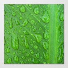summer raindrops Canvas Print