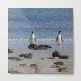 Magellanic Penguins Metal Print