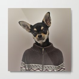 Chihuahua wearing a pullover Metal Print