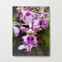 Wild Orchid (Pink & White) Metal Print