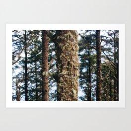 Moss 1 Art Print