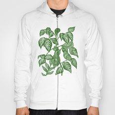 verde Hoody
