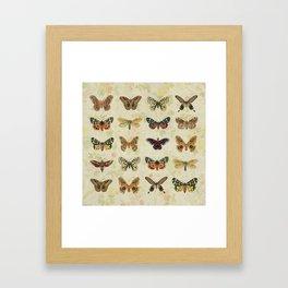 Moths & Butterflies Framed Art Print