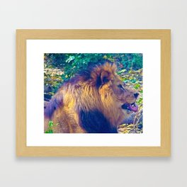 Male Lion Framed Art Print