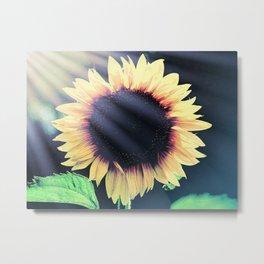 Sunflower Yellow Flower Cottage Kitchen Art Modern Country Art A586 Metal Print