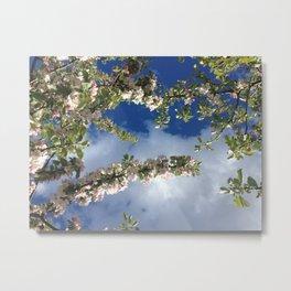 Alaska Apple Blossoms by Mandy Ramsey Metal Print