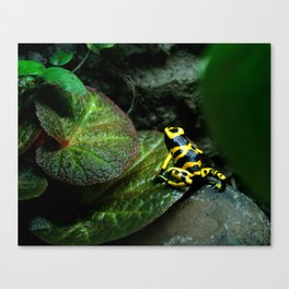 Leucomelas Poison Dart Frog Canvas Print