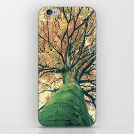 The big strong tree iPhone Skin