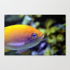 Hey fish!  Canvas Print
