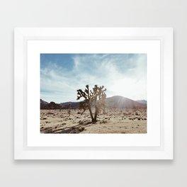 Joshua Tree in Joshua Tree National Park Framed Art Print