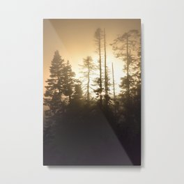 Fog through the trees Metal Print