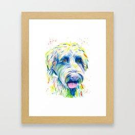 Maggie (The labradoodle) Framed Art Print