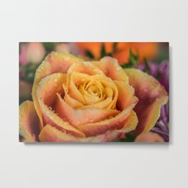 Dew Laden Rose Metal Print