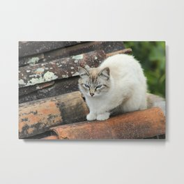 Portrait of a White Cat Metal Print