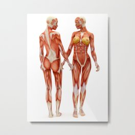 Female muscle system Metal Print
