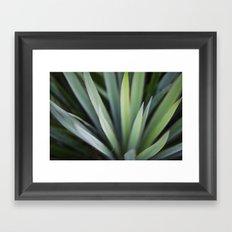 Yucca #6 Framed Art Print