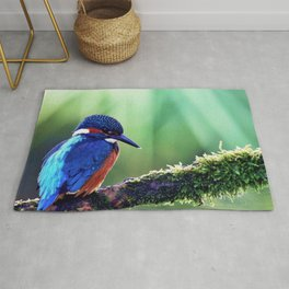 common kingfisher bird color beak branch Rug