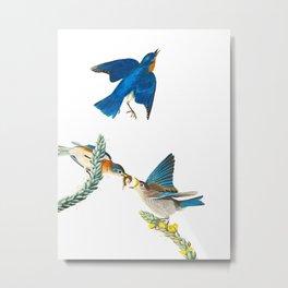 Blue Bird Vintage Illustration Metal Print