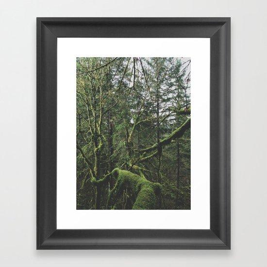 Moss Covered Trees Framed Art Print