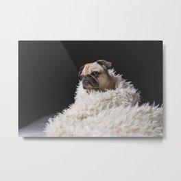 Canine 9 Metal Print