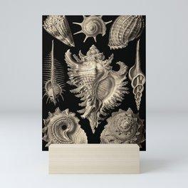 Ernst Haeckel Prosobranchia Sea Shells Mini Art Print