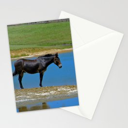 Black Horse. Animal. Pennsylvania Stationery Cards