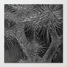 Joshua Tree Plata by CREYES Canvas Print