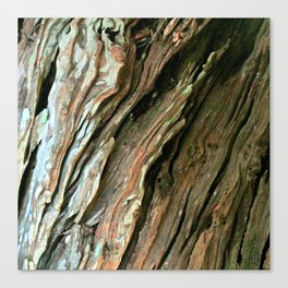 Old Olive tree weathered wood Canvas Print