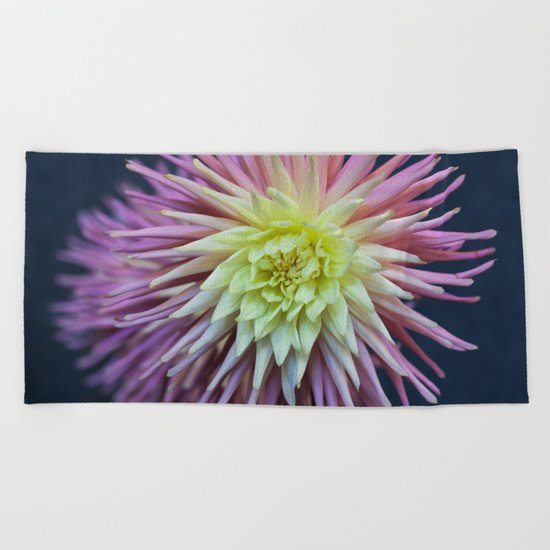 Pink and White Dahlias Beach Towel