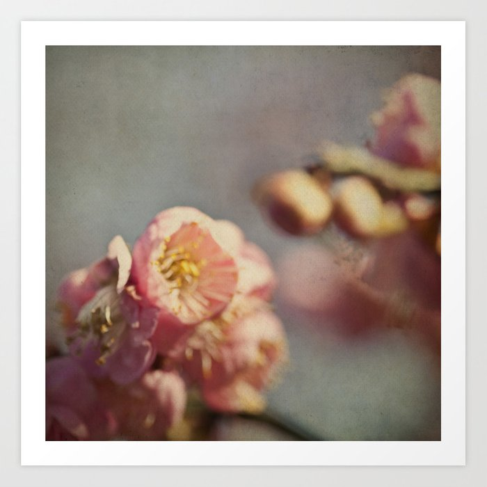dream - flower photography with soft focus and blur Art Print