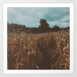 Crisp Fall Day at the Corn Maze Art Print