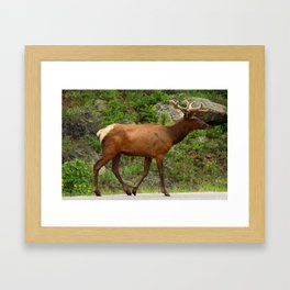 Walking On The Street Framed Art Print